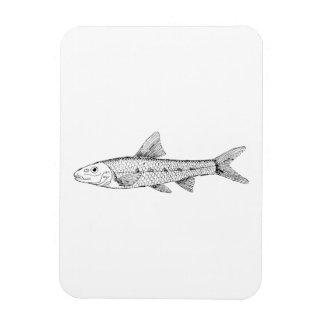 Gudgeon Fish Vinyl Magnet
