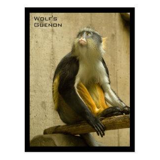 Guenon del lobo tarjetas postales
