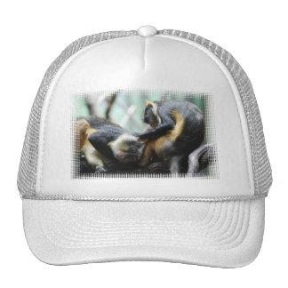 Guenon Monkeys  Baseball Hat