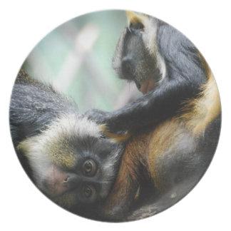 Guenon Monkeys Plate