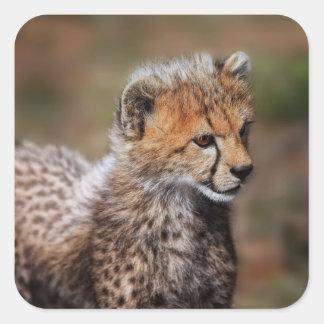 Guepardo (Acinonyx Jubatus) como se ve en el Masai Pegatinas Cuadradas