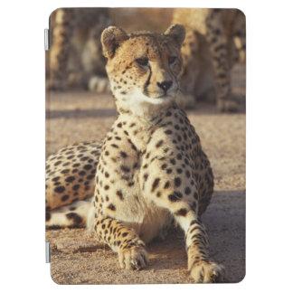 Guepardo (Acinonyx Jubatus), Kruger nacional. Cover De iPad Air