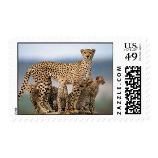Guepardo de la madre y su Cubs Sellos