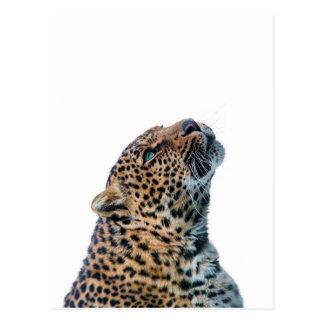 Guepardo del gato grande en el fondo blanco tarjeta postal