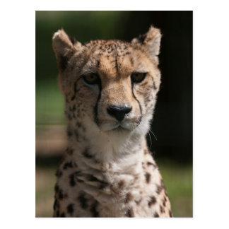 guepardo en la selva tarjetas postales