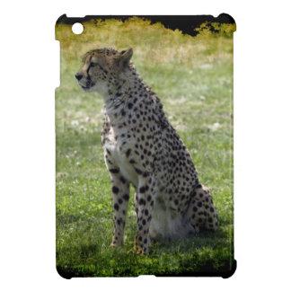 Guepardo, gato salvaje, Animal-Amante, fauna