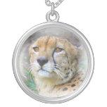 guepardo grimpolas
