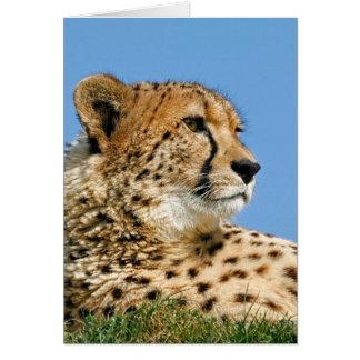 Guepardo hermoso - tarjeta de felicitación