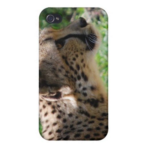 guepardo iPhone 4 coberturas