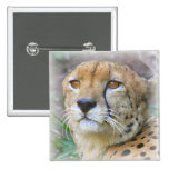 guepardo pins