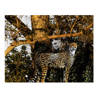 guepardo postal