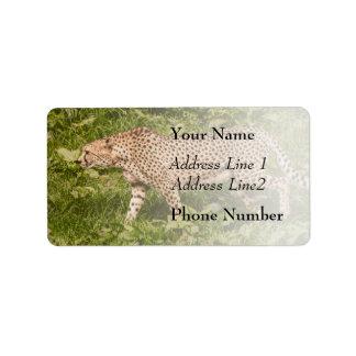 Guepardo que camina en un campo, fotografía animal etiquetas de dirección
