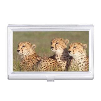 Guepardo que miente en la hierba, protección de cajas de tarjetas de visita