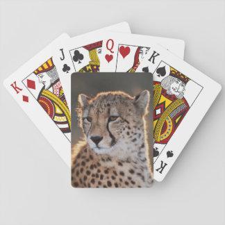 Guepardo que mira lejos baraja de póquer