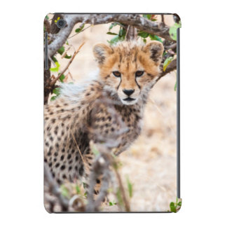 Guepardo, reserva nacional de Maasai Mara Fundas De iPad Mini Retina