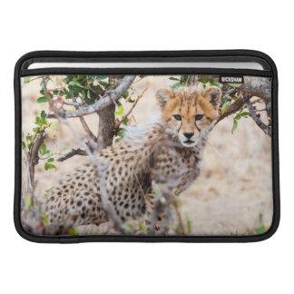 Guepardo, reserva nacional de Maasai Mara Fundas MacBook
