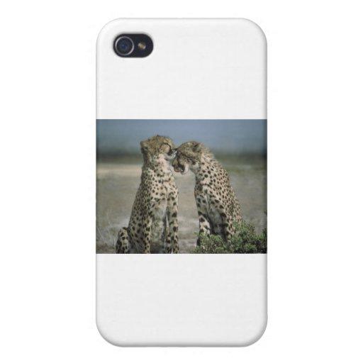 guepardos iPhone 4/4S fundas