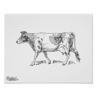 Guernsey Cow Poster