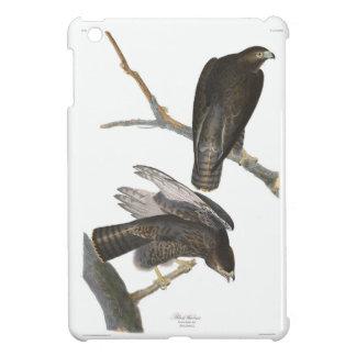 Guerrero negro de la placa 86 de Audubon