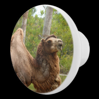 Guess What Day It Is Camel Cabinet Knob /