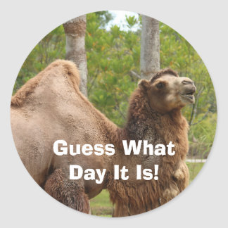 Guess What Day It Is Camel Funny Envelope Seal
