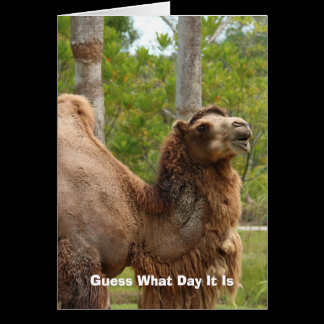 Guess What Day It Is Camel Funny Quote Card