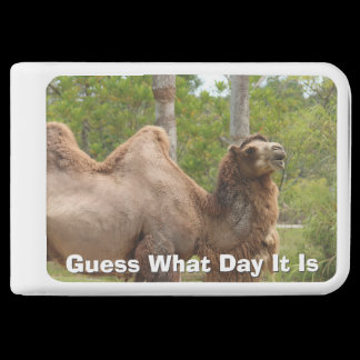 Guess What Day It Is Camel Funny Quote Charger /