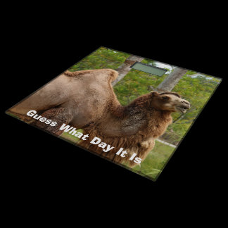 Guess What Day It Is Camel Funny Quote Custom Bathroom Scale