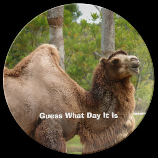 Guess What Day It Is Camel Funny Quote Custom Dinner Plate