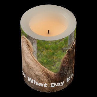 Guess What Day It Is Camel Funny Quote Custom Flameless Candle