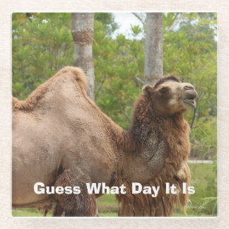 Guess What Day It Is Camel Funny Quote Glass Coaster