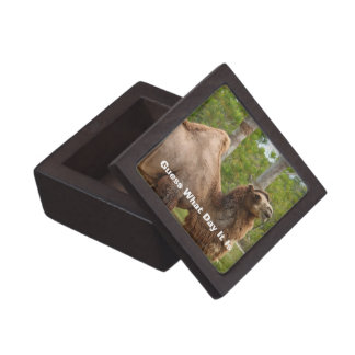 Guess What Day It Is Camel Funny Quote Jewelry Box