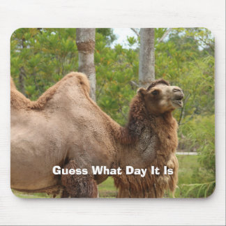 Guess What Day It Is Camel Funny Quote Mouse Pad