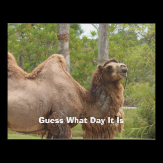 Guess What Day It Is Camel Funny Quote Panel Wall Art