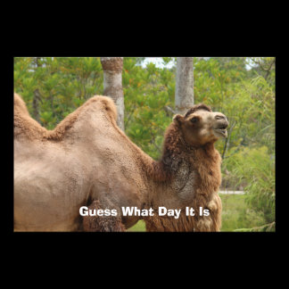 Guess What Day It Is Camel Funny Quote Photo Print