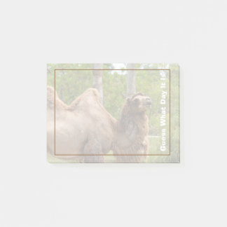 Guess What Day It Is Camel Funny Quote Post-it Notes