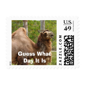 Guess What Day It Is Camel Funny Quote Postage