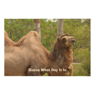 Guess What Day It Is Camel Funny Quote Wood Print