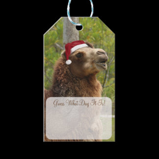 Guess What Day It Is Christmas Camel Funny Quote Gift Tags