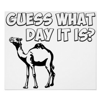 Guess What Day it Is? Hump Day Camel Posters