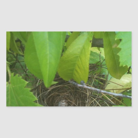 Guess which bird's eggs? Nest 1 Rectangular Sticker