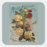 Guía del vintage 1894 a la cultura color de rosa calcomanías cuadradas