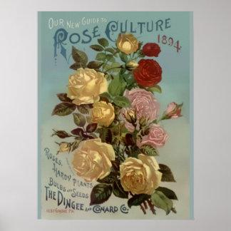 Guía del vintage 1894 a la cultura color de rosa póster