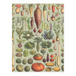 Guía francesa al jardín postales