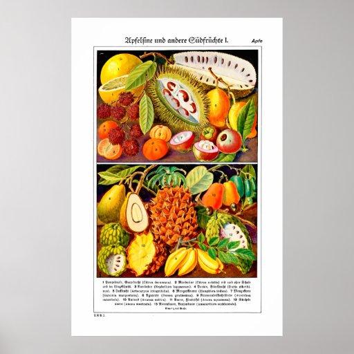 Guía ilustrada 1937 de la fruta - lustre del poste póster