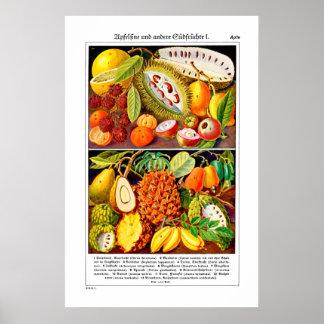 Guía ilustrada 1937 de la fruta - lustre del póster