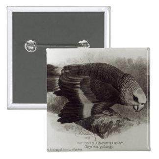 Guilding's Amazon Parrot Pinback Buttons