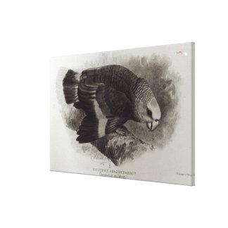 Guilding's Amazon Parrot Canvas Print