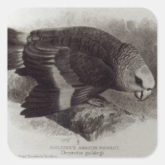 Guilding's Amazon Parrot Square Sticker