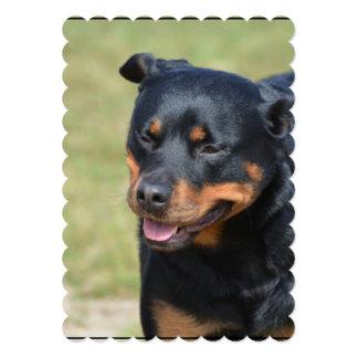 Guileless Rottweiler Card